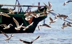 海洋生态红线:渤海湾生态复原的最后稻草?