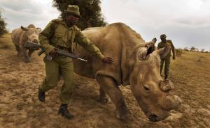 联合国历史性决议全球联合打击野生动物犯罪,中国是关键一环