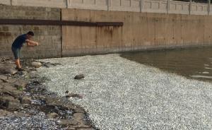 天津海河上游被曝现大量死鱼,官方回应称已派人前往调查