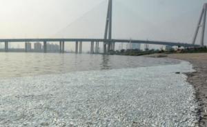 天津市环境监测中心:出现死鱼河段未检出氰化物
