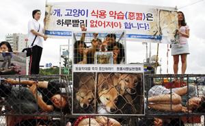 """韩国四招化解""""狗肉风波"""":干扰他人吃狗或遭法律处罚"""