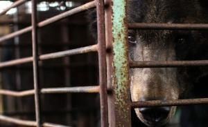 运输前打镇静剂运到后打兴奋剂:浙警方捣毁珍稀动物销售网络