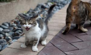 """上海一小区流浪猫连遭""""枪击"""",体内发现大量金属碎片"""