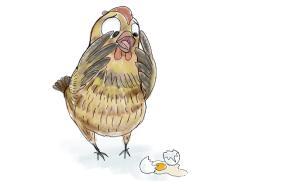 【答网友问】生吃鸡蛋安全吗?