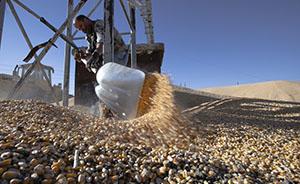 """""""退运美国转基因玉米""""遭误读,中国每年进口数百万吨"""