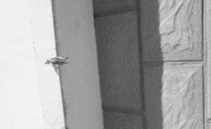 河北一廉租房外墙钥匙一捅就透,住建局工作人员称就该是软的
