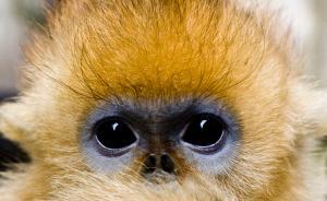 """每日一词:等到""""猴年马月"""""""