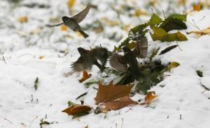 中央气象台:中东部地区大范围雨雪今起结束,还要降温