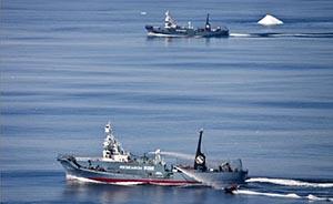 """环保组织致信安倍晋三,警告日本停止""""科研捕鲸"""""""