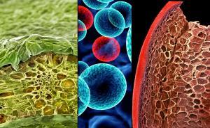 看完这些显微镜下的食物,你的减肥大业就完成一半了
