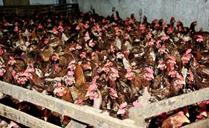 美国政府实验室连爆安全漏洞,致命禽流感病毒外流