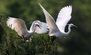 """栖息地保护""""千呼万唤""""终入法,专家:野生动物的最大福利"""
