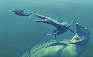 海上志怪|托梦的甲鱼