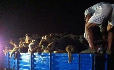 查获1600条狗含氰化物等剧毒,浙江破获跨省毒杀贩狗肉团伙