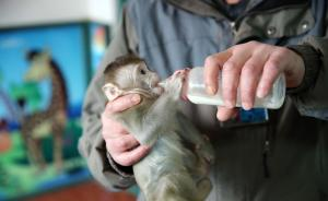 专家热议野生动物保护法修订草案,倡议要保护不要利用
