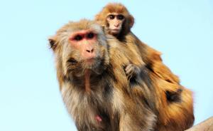 """野生动物保护法修订收6000条意见:""""利用""""条款引争议"""