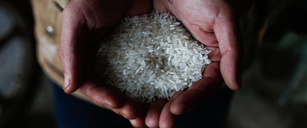 大米砷含量上限0.2毫克每公斤,中国标准首成国际标准