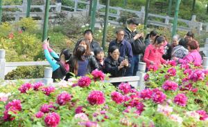 """洛阳牡丹文化节开幕在即,副市长承诺杜绝""""天价""""宰客"""