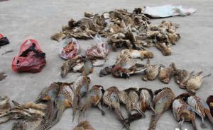 央视曝光河北邢台非法贩卖野生鸟类,一名鸟贩子迫于压力自首