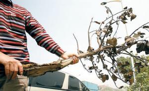 光明日报刊文:有单位只重视造林不管养护,致大量树木毁坏