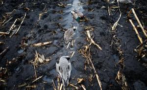 黑龙江一保护区内数百只候鸟被毒死,警方悬赏2万元缉凶
