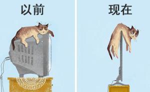 趣看|科技,如何改变了猫的生活