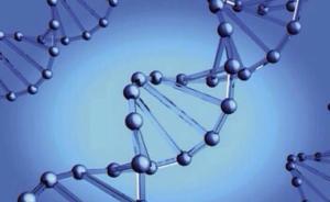 中国转基因重大专项:四分之一经费用于研究生物安全