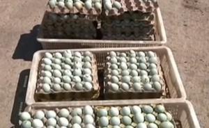 黑龙江保护区特大毒杀候鸟案:又抓获嫌犯1名,追回鸟蛋千枚