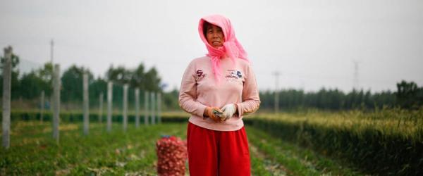 5月19日,山东金乡卜集镇田间,一名挖蒜女工。 澎湃新闻记者 权义 图
