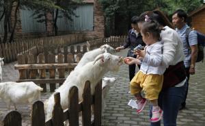 """上海动物园儿童动物园开放,细尾獴""""丁满""""、耳廓狐入住"""