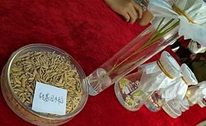 中国转基因水稻安全证书今日全部到期,是否续签成功并未公开