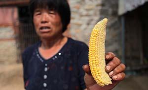 直击辽宁干旱:部分乡村庄稼几近绝收,有可能夏秋连旱
