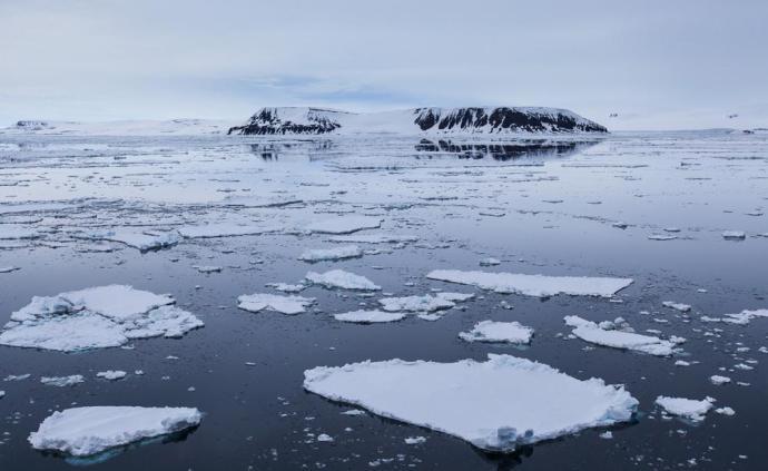 美國研究:氣候變暖或導致北美地區候鳥個頭變小