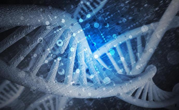 生命孕育起點:中國團隊揭示人類早期胚胎染色體結構動態變化