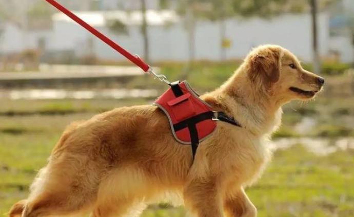 合肥打击不文明养犬:处理遛狗不拴绳296起捕流浪犬97条