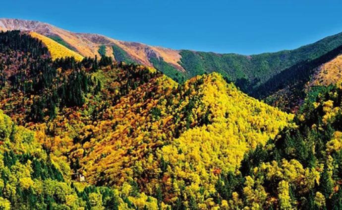世行1.5億美元貸款助力中國長江上游森林生態恢復