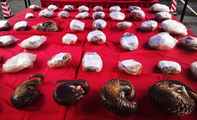 當進出口遇上CITES公約:瀕危物種貿易風險知多少?