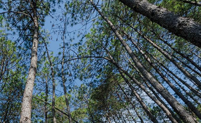 林木還讓不讓砍?怎么砍?新華社解讀新修訂的森林法