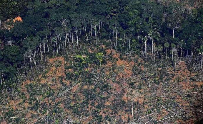新研究:亚马孙森林被砍伐后再生速度远低于此前预期