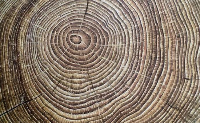 研究古树年轮,科学家警告:美洲更容易遭受灾难性干旱气候