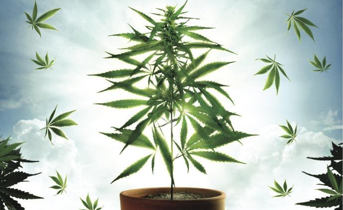 薩貝特:美國大麻合法化的問題、代價與對策