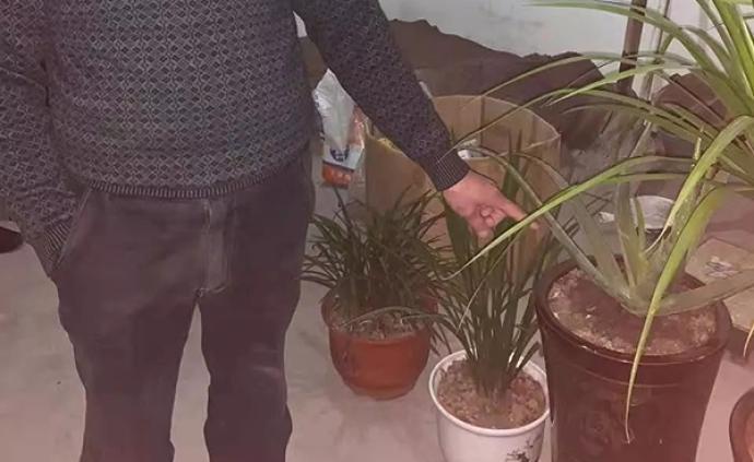 """义乌男子偷7盆花被拘14天,辩称""""出于爱花,不算偷"""""""