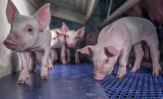 5家龙头猪企业绩预喜:均实现翻倍式增长,增幅最高逾10倍
