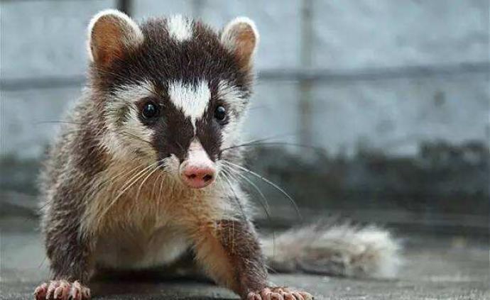 安徽省禁止一切形式野生動物交易