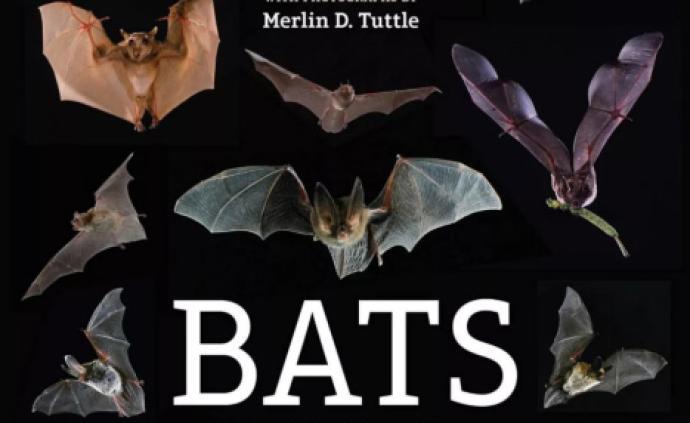 地球的一半|侵擾越冬蝙蝠,是此刻最不該發生的事情