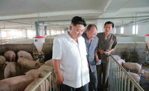 当地时间2016年8月18日,据朝鲜《劳动新闻》18日报道,朝鲜领导人金正恩视察了大同江养猪场和大同江综合果园。 东方IC 图