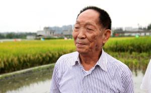 袁隆平杂交水稻论文发表50周年:跨越禁区,具永恒的指导性