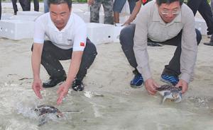 三沙市委书记、市长肖杰一行在晋卿岛放生海龟、植树