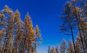 国家林业局公布15起挂牌督办案件,专项行动刑事立案超千起
