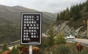 山西五台山6名游客夜间逃票进山,被困4小时后获僧人施救